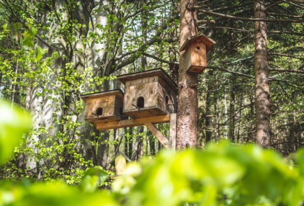 How to Build a Bird Table